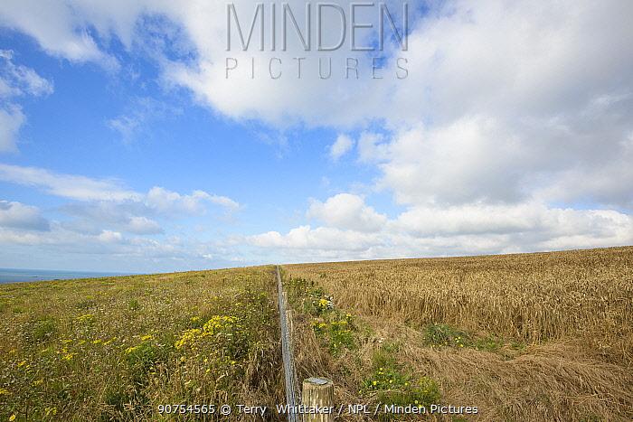 Grassland managed for wildlife, particularly ground-nesting birds. Dover Cliffs, Kent, UK. July