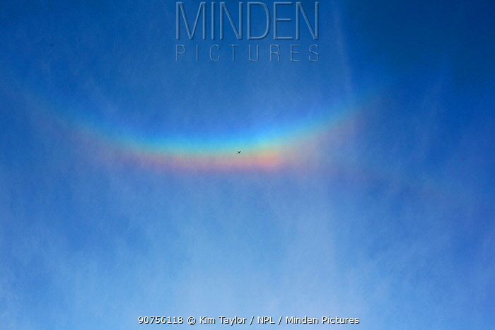 Jet liner passes beneath a 'cloudbow' caused by ice crystals in high cloud refracting light from the setting sun. Surrey, England, UK, April.