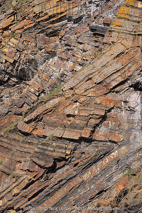 Chevron folds of Sandstone and shale rock layers in Millook Haven cliffs, Cornwall, UK, April 2014.