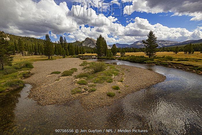 Backcountry stream in the Hetch Hetchy region of Yosemite National Park, California, USA.