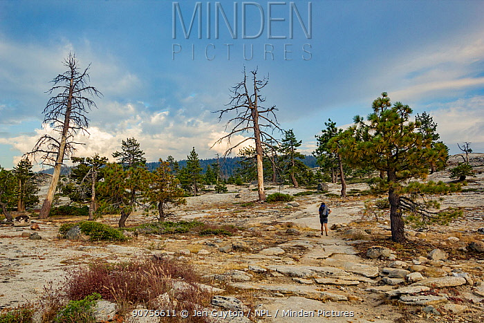 Hiker walks over a windswept back country ridge in the Hetch Hetchy region of Yosemite National Park, California, USA.