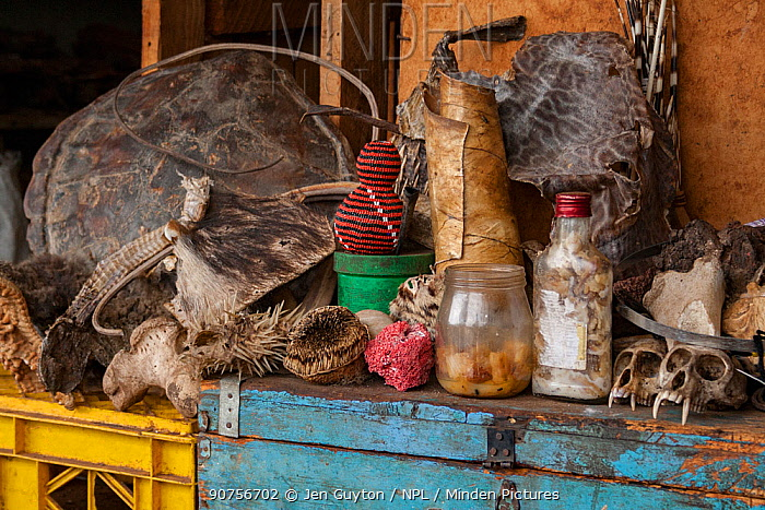 Marketplace in Mbabane selling animal body parts including sea star, the shell of a sea turtle, a snake skin, porcupine quills, a desiccated blowfish, the skin of a hedgehog, a coral, the fur of a spotted cat, a seal pelt, and monkey skulls. Swaziland, November 2009.