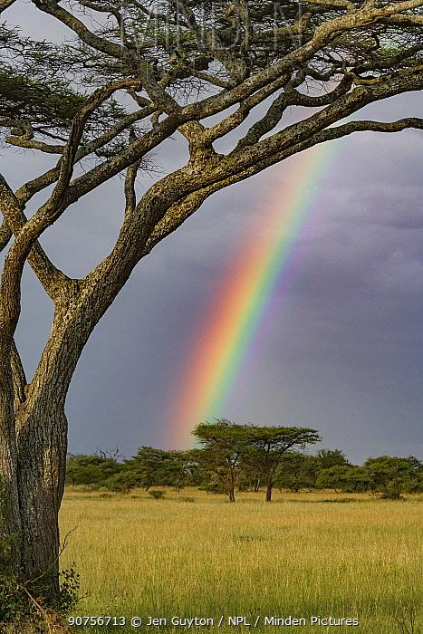 Rainbow above Umbrella thorn acacia (Vachellia tortilis) Serengeti National Park, Tanzania.