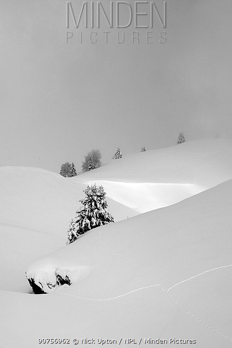 Alpine landscape and pine trees after fresh snow, Hauteluce, Savoie, France, February 2013.
