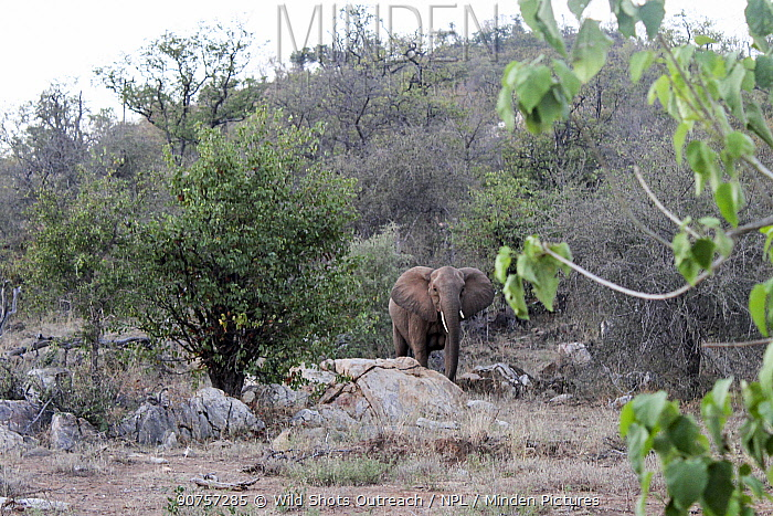 African elephants (Loxdonta africana) , Kruger National Park, South Africa. Picture taken by pupil Prisence Mashaba during residential photography course organised by Wild Shots Outreach.