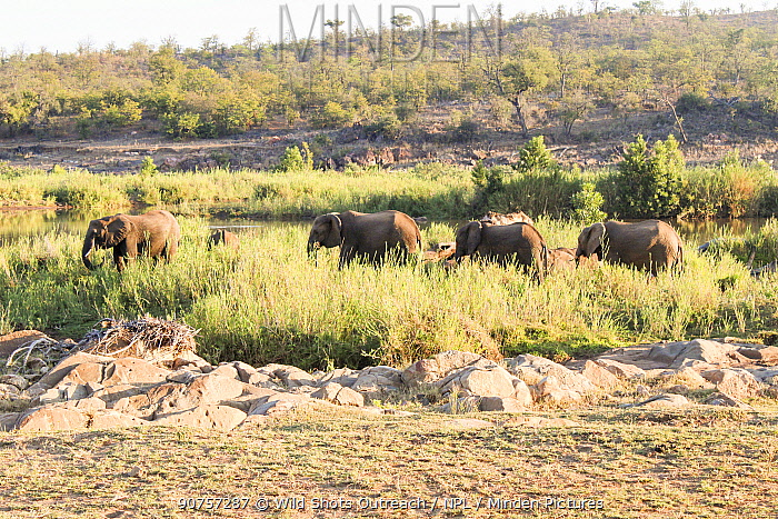 African elephant (Loxodonta africana) herd, Kruger National Park, South Africa. Picture taken by pupil Prisence Mashaba during residential photography course organised by Wild Shots Outreach.
