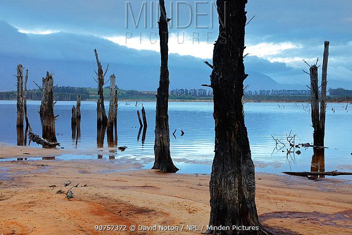Drowned trees on the shore of Theewaterskloofdam, western Cape, South Africa, December 2014.