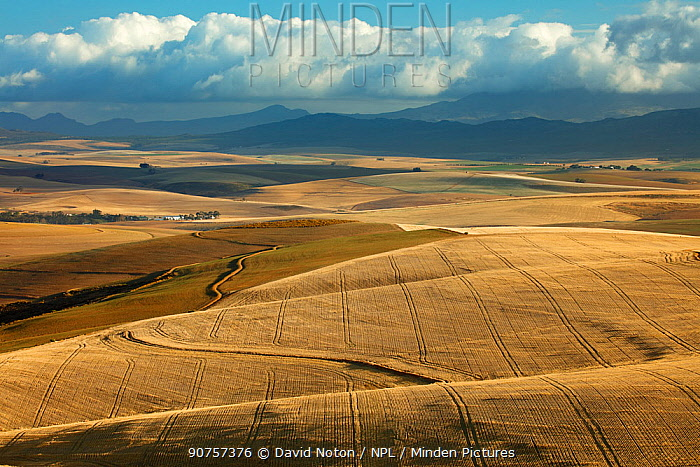 Rolling farmland in the Overberg region near Villiersdorp, Western Cape, South Africa. December 2014.