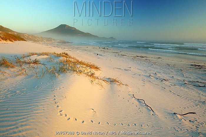 Sea fog and Cormorants (Phalacroon Platboon Beach, Cape of Good Hope, South Africa