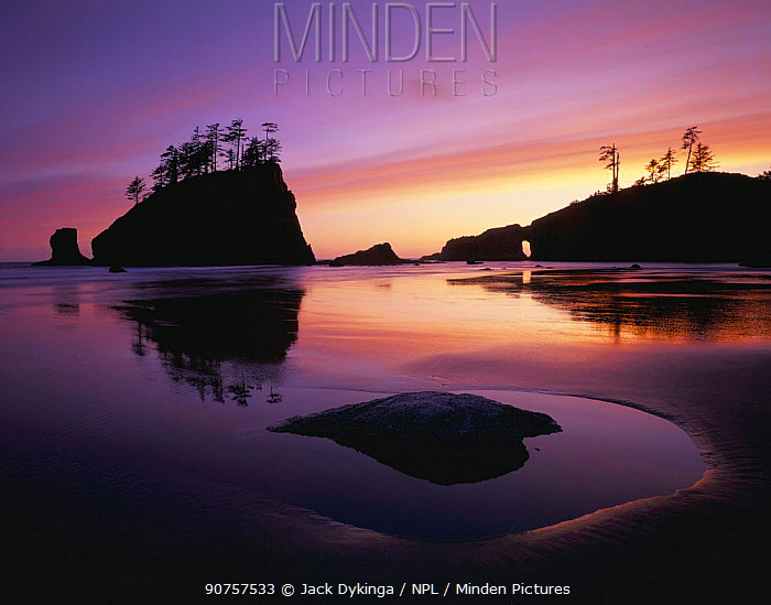 Sunset with silhouettes of seastacks at low tide, Second beach, Olympic peninsula, Olympic NP, Washington, USA