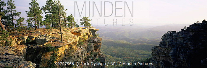 Ponderosa pines {Pinus ponderosa}, Promontory Butte on General George Crook Trail along the Mogollon Rim, Apache Sitgreaves National Forest, Arizona, USA