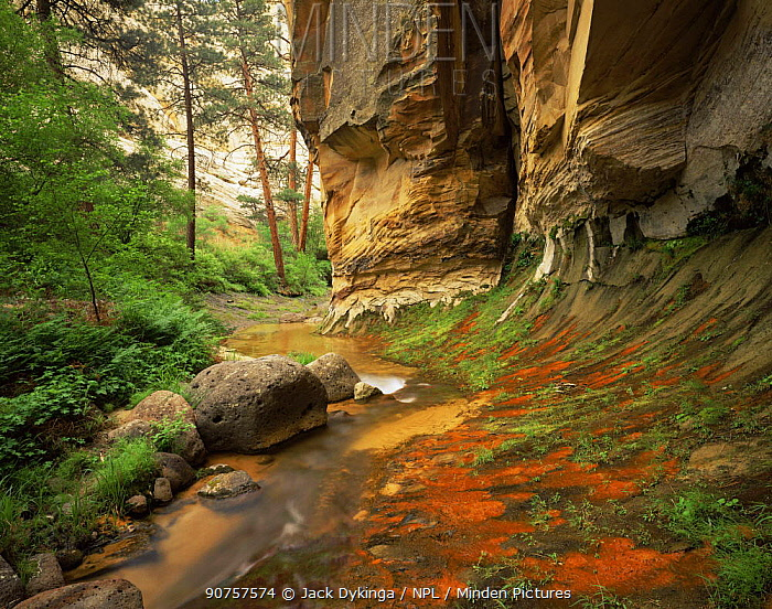 Red algae on seeps along stream, Death Hollow, Grand Staircase-Escalante National Monument, Utah, USA