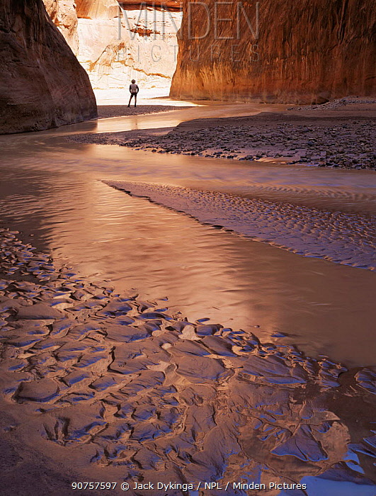 Hiker amongst sand stone cliffs and wave ripple patterns, Paria Canyon, Arizona, USA
