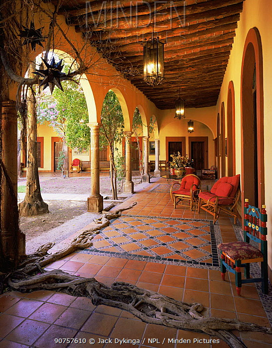 Courtyard of Hotel La Posada, El Fuerte, Sinaloa, Mexico, with {Ficus sp} roots spreading across the tiled floor.
