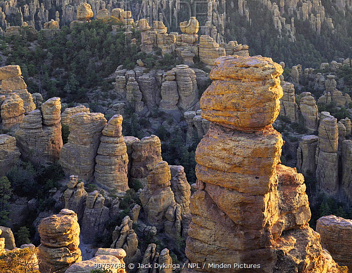 Rock spires in last rays of sunset, Echo Canyon, Chiricahua National Monument, Arizona, USA