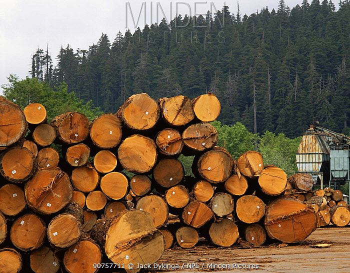 Timber from felled old growth Redwood trees, Arcata Redwood Company Mill, Redwood National Park, California, USA