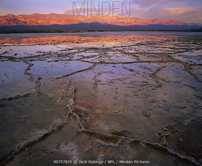 Salt crystal formations in partially crystalised salty lake, Panamint Range in distance with dawn light reflected in water, Death Valley National Park, California