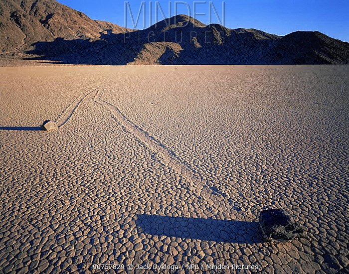 Boulders with trails across a dry lake bed, sunset, The Racetrack Playa, Death Valley National Park, California
