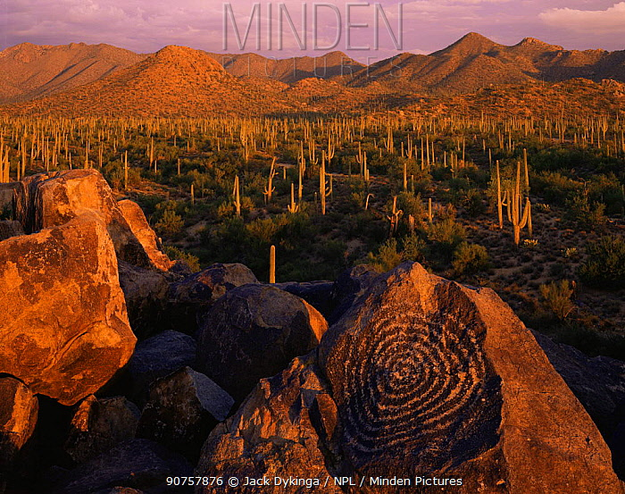 Signal Hill petroglyphs at sunset with Saguaro Cacti (Carnegiea gigantea) and Tucson Mountains in the background, Saguaro National Monument, Arizona, USA