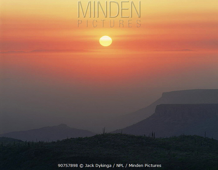 Mesas in the Pacific fog rising above the Vizcaino Desert at sunset with Cardon Cacti (Pachycereus pringlei) in the foreground, Baja California Sur, Mexico, Central America