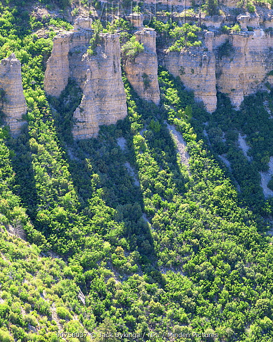 The cliffs at Swamp Point casting shadows accross vegetation in Grand Canyon National Park, Arizona