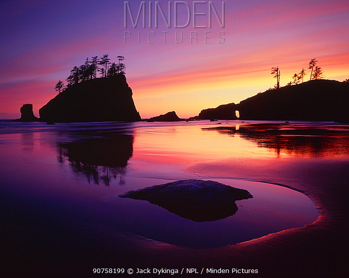 Silhouette of sea stacks at sunset with patterns in the sand left by the receding tide, Second Beach, Olympic Peninsula, Olympic National Park, Washington, USA