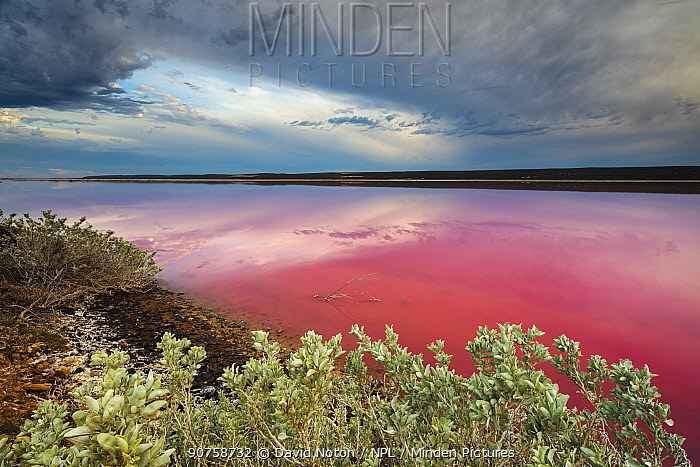 The Pink lagoon at Port Gregory, Western Australia, December 2015.
