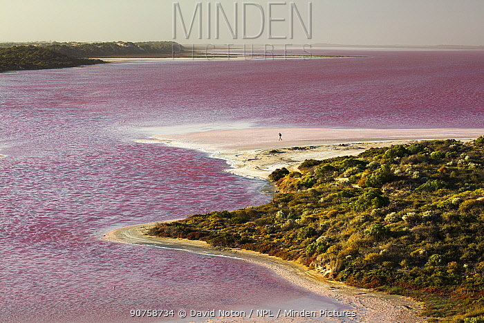 Woman walking on the shores of the Pink Hutt Lagoon at Port Gregory, Western Australia, December 2015.