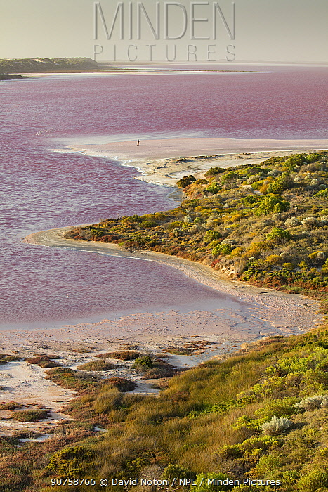 Woman walking along the shore of the Pink Hutt Lagoon at Port Gregory, Western Australia, December 2015.