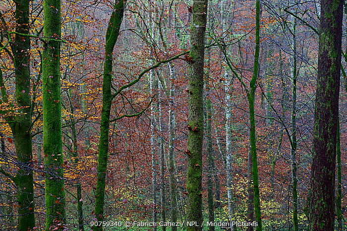 Autumn leaves and colors, Vosges forest, France, November 2015.