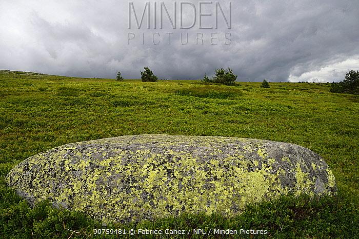 Landscape on Mont-Lozere, Cevennes national park,  France, July.