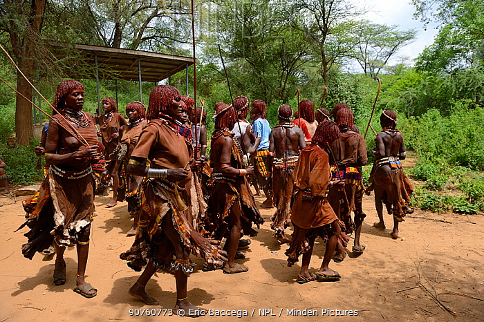 Women dancing in traditional clothing during the Ukuli ceremony, a rite of passage for boys to become men. Hamer tribe, Omo river valley, Ethiopia, September 2014.