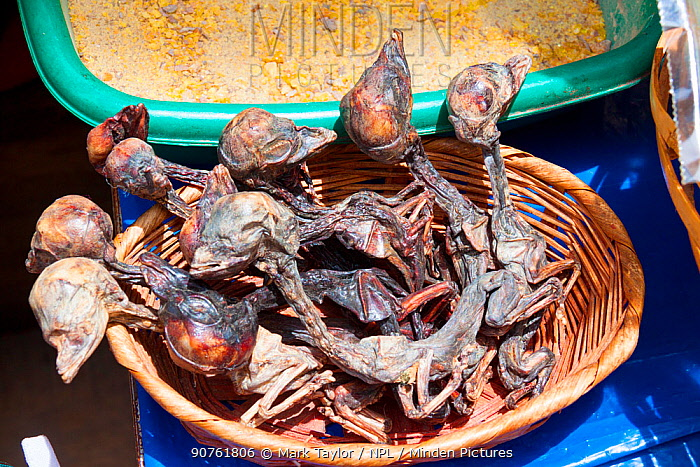 """Llama foetuses for sale in a La Paz market, Bolivia. December 2016. The """"Witches' Market"""" stalls of La Paz are run by local witch doctors. Llama foetuses are believed to be good luck and are sometimes buried under the foundation of houses."""