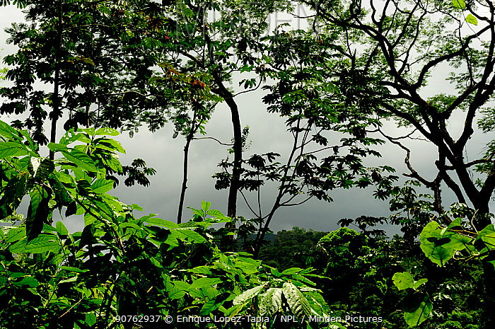 Tropical rainforest in Rio Platano Biosphere Reserve and UNESCO World Heritage Site, La Mosquitia, Honduras
