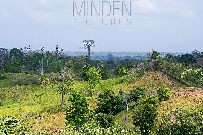 Rainforest cleared for agriculture in the Darien National Park UNESCO World Heritage Site, Panama. February 2017.