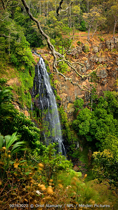 Morans Falls, Green Mountains, Lamington National Park, Rainforests of Australia UNESCO World Heritage Site, Queensland, Australia.