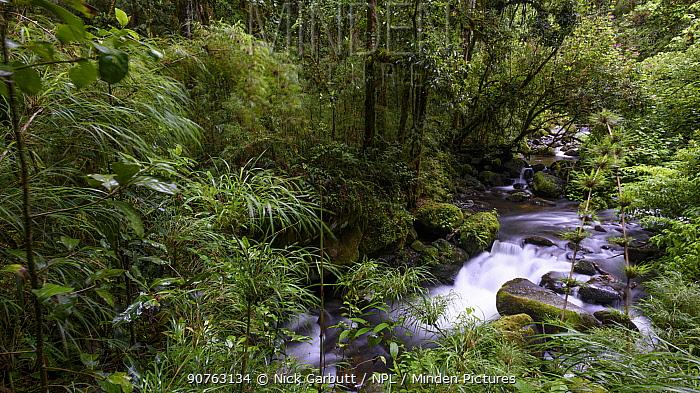 River and montane rainforest. Savegre Valley, Costa Rica.