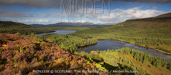 Loch Gamnha and Loch an Eilein surrounded by Rothiemurchus Forest, view north from Creag Chait, Cairngorms National Park, Scotland, UK, August 2016.