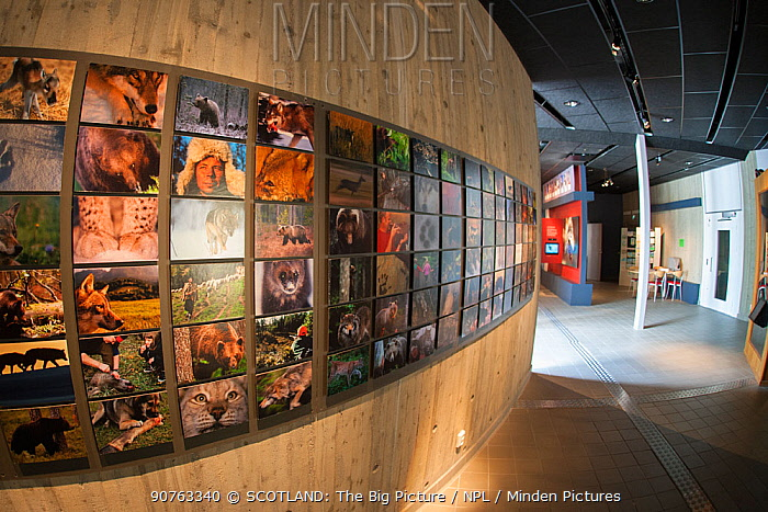 Wildlife images displayed on wall at Big 5 Carnivore Centre, Jarvzoo, Sweden