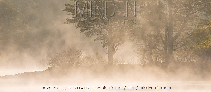 Scots pine (Pinus sylvestris) trees silhouetted at dawn beside misty loch, Loch Vaa, Cairngorms Natioinal Park, Scotland, UK, DATE. May