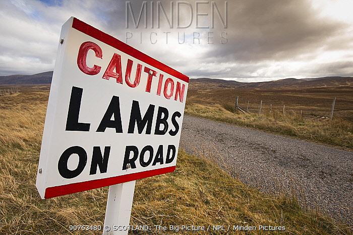 Sign warning of lambs / sheep on road, Sutherland, Scotland, UK
