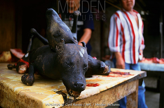 Dog meat for sale in Tomohon market, Celebes, Indonesia.