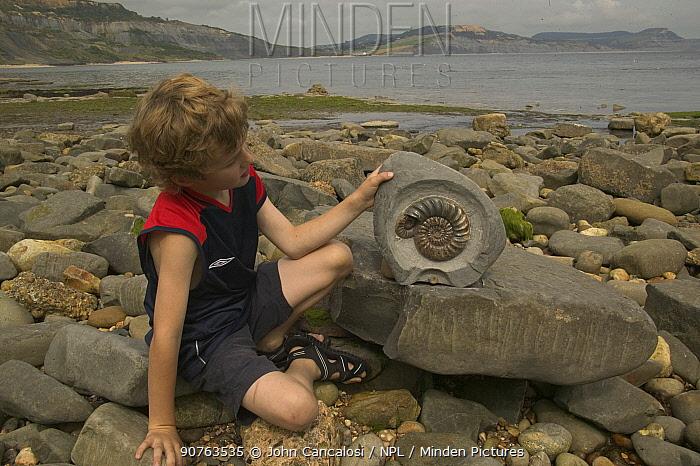 Boy with fossil of Ammonite {Asteroseras sp} prepared specimen, Lyme Regis, Jurassic coast World Heritage Site, Dorset, UK, model released