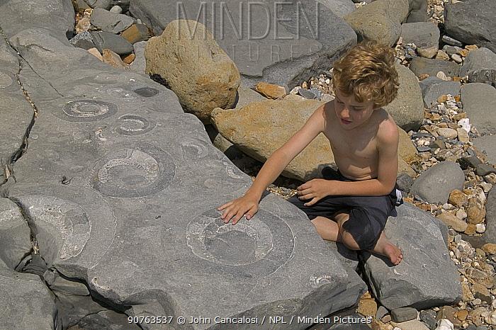 Boy with fossil Ammonites {Arietites sp} mass mortality, Jurassic Coast World Heritage Site, Lyme Regis, Dorset, UK, model released