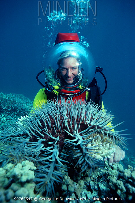 Martha Holmes with Crown of Thorns starfish (Acanthaster planci) on helmet. Australia.