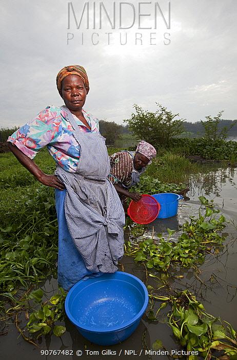 Women with washing bowls wading out to reach lake edge beyond invasive Water hyacinth (Eichhornia crassipes) Kisumu region, Lake Victoria, Kenya, December 2013.