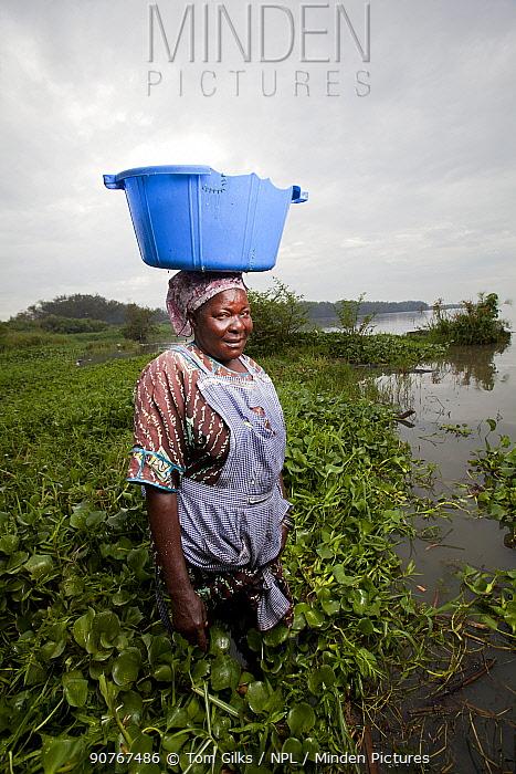 Woman carrying plastic washing bowl on head and wading through invasive Water hyacinth (Eichhornia crassipes) at lake edge, Kisumu region, Lake Victoria, Kenya