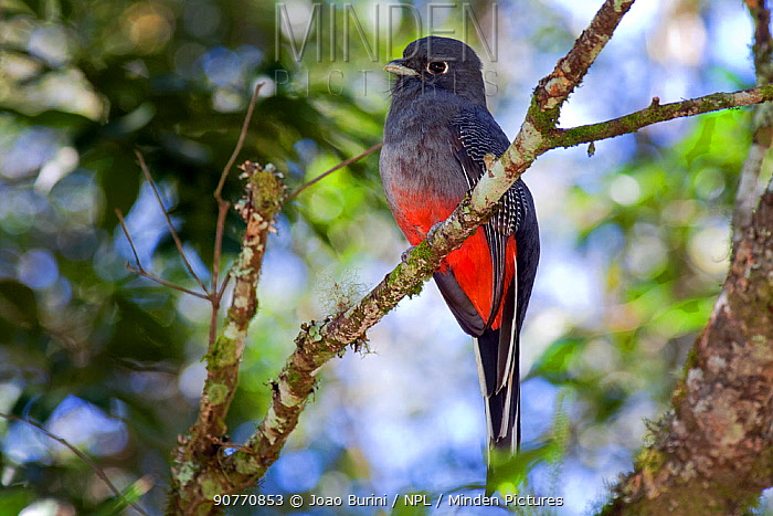 Ribeirão Grande São Paulo fonte: www.mindenpictures.com