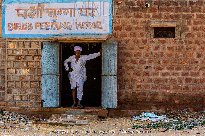 Man at  feeding station for migrating  Demoiselle cranes (Grus virgo) Khichan, India