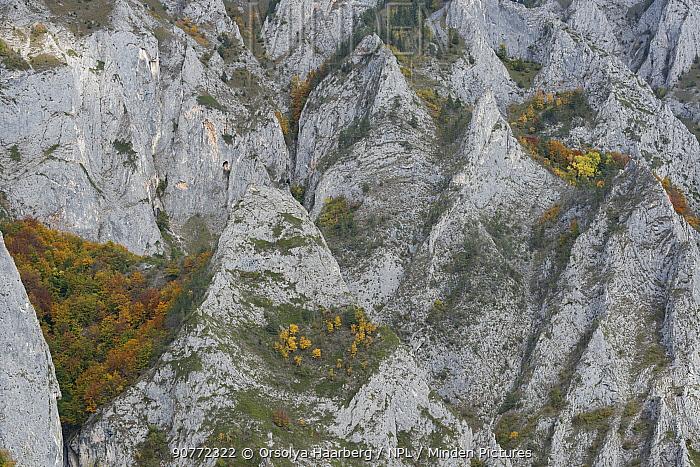Limestone rocks of Mount Belioara. Alba county, Transylvania, Romania. October 2011.